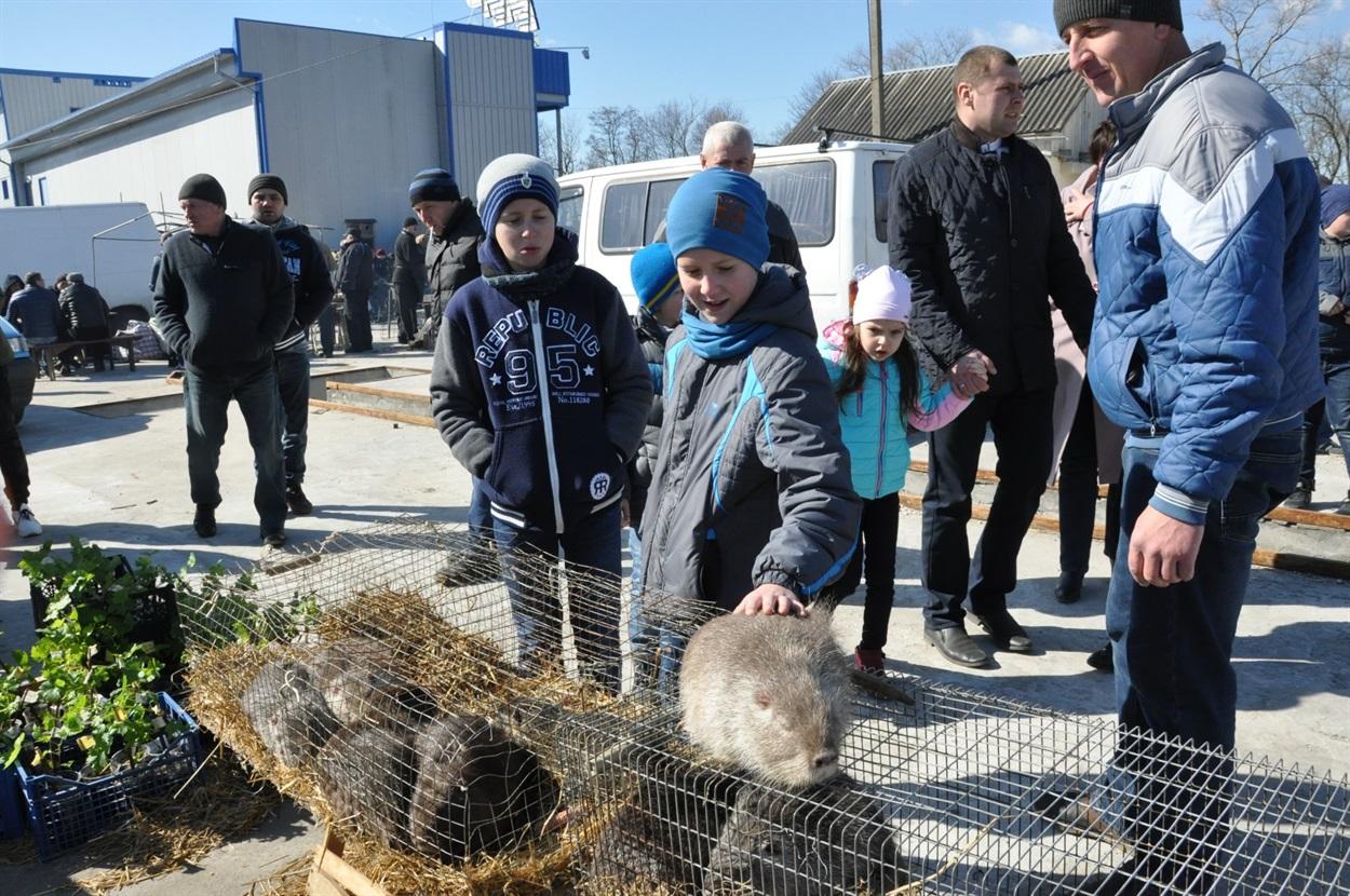 Выставка-ярмарка голубей, г.Чертков, 9.03.2019г.