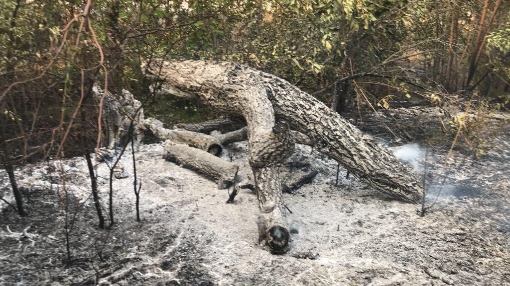 Наслідки пожежі