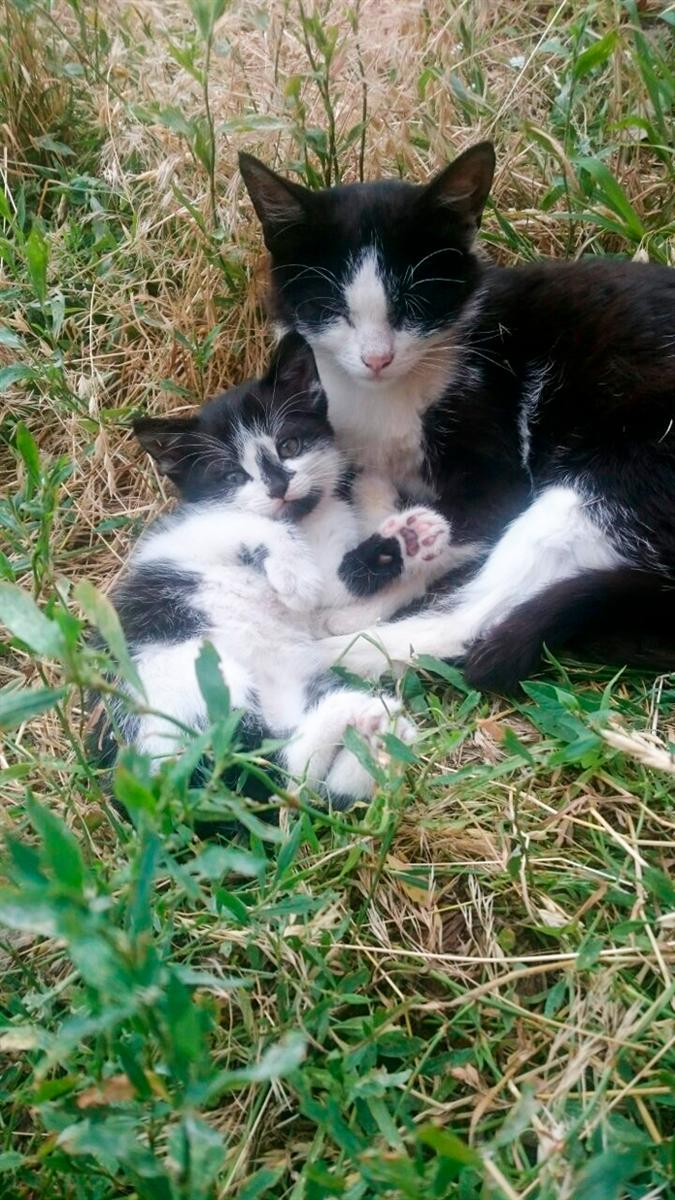 Кішка Мотя