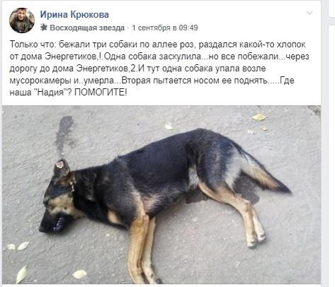 Повідомлення про смерть собаки