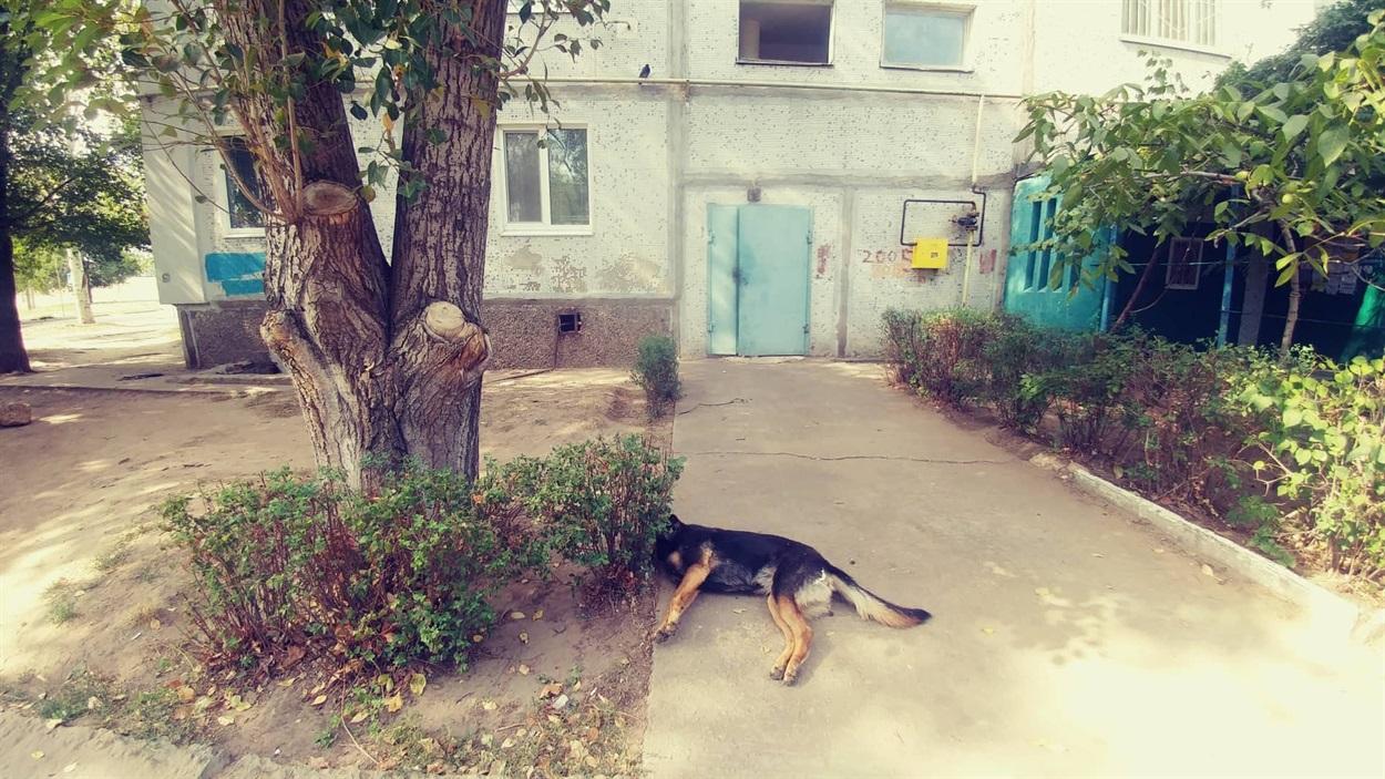 Труп собаки біля будинку