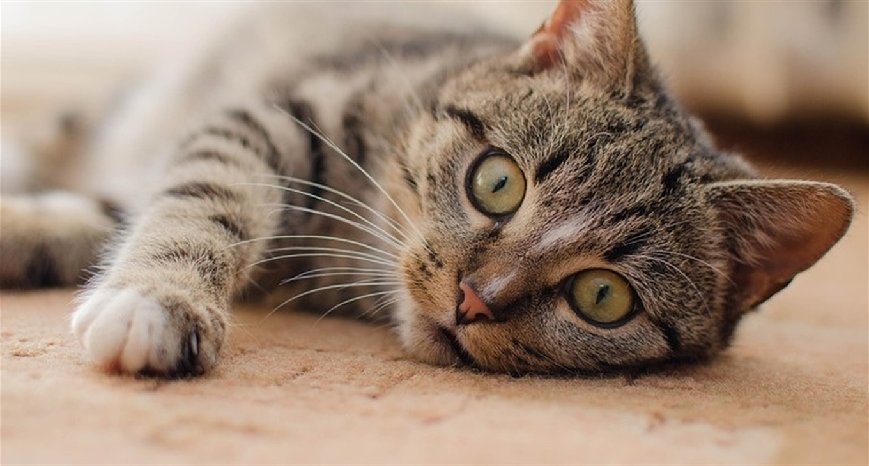 "Результат пошуку зображень за запитом ""як вибрати кота"""